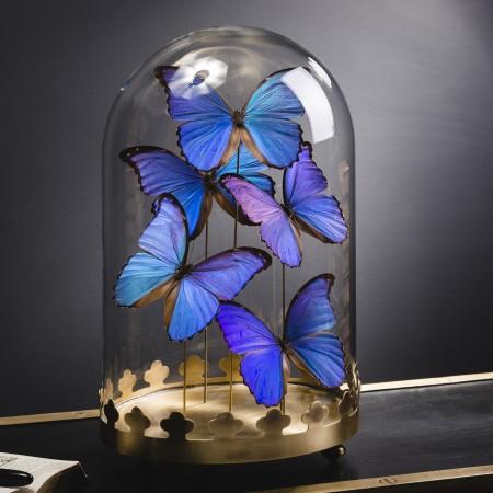 5 BLUE MORPHO BUTTERFLIES UNDER OVAL GLASS