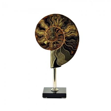 The Ammonite