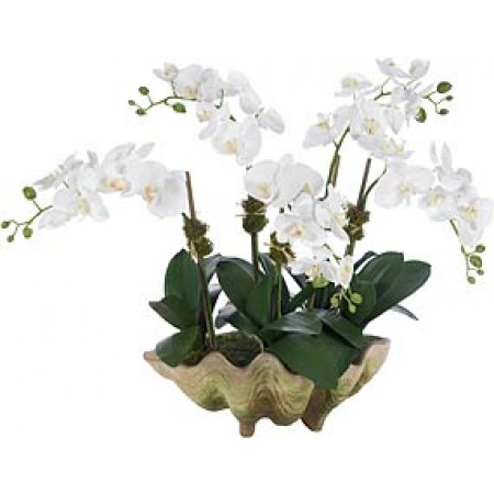 Orchids in clamshell