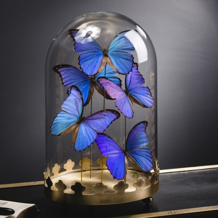 5 BLUE MORPHO BUTTERFLIES UNDER OVAL GLASS